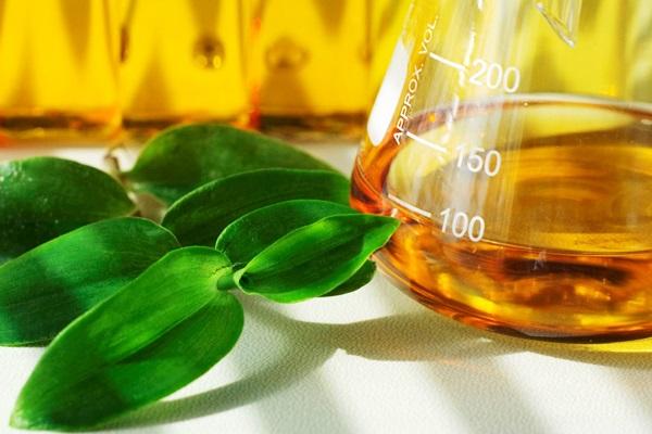 Kávézaccból állítottak elő biodízelt